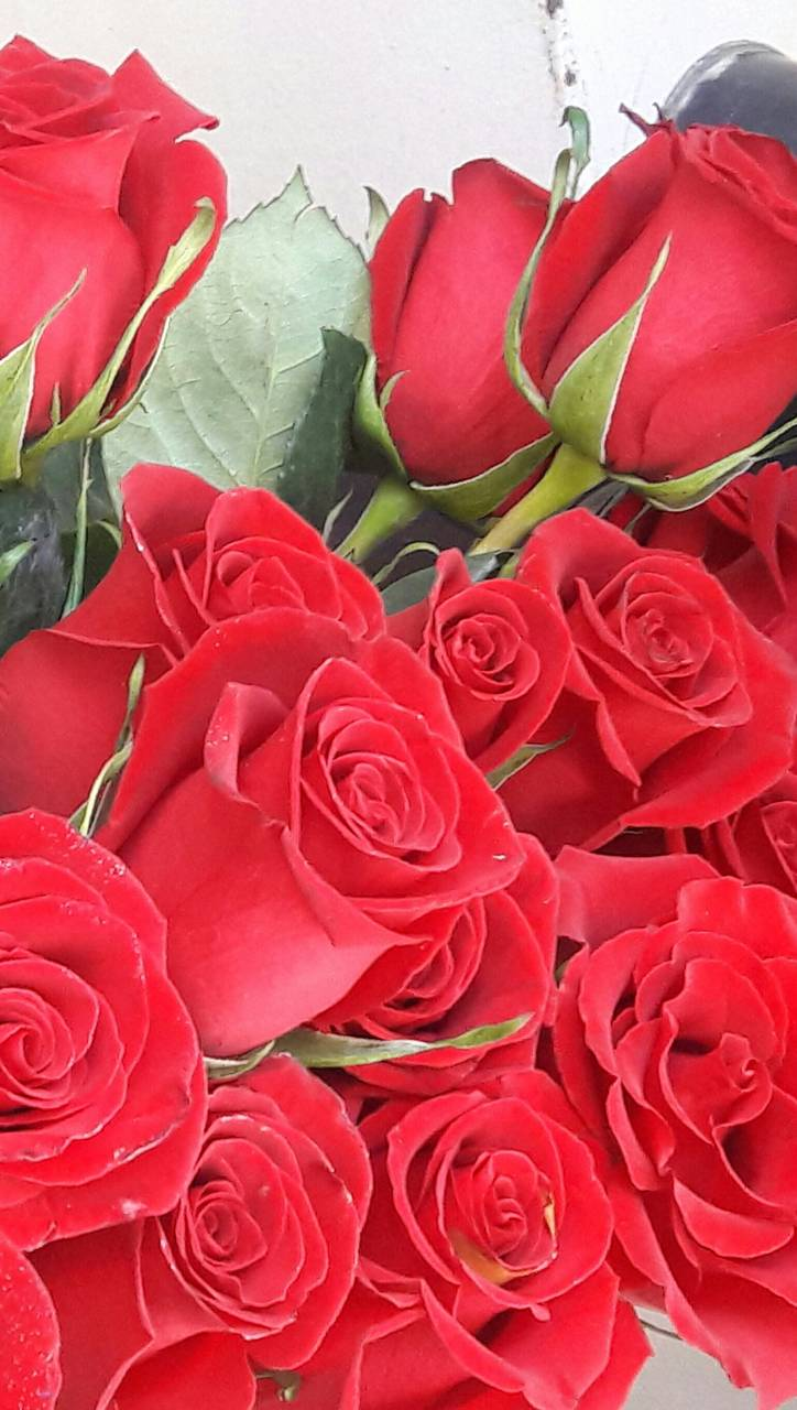 Romantic Red Roses Wallpaper By Pamemuriel 42 Free On Zedge