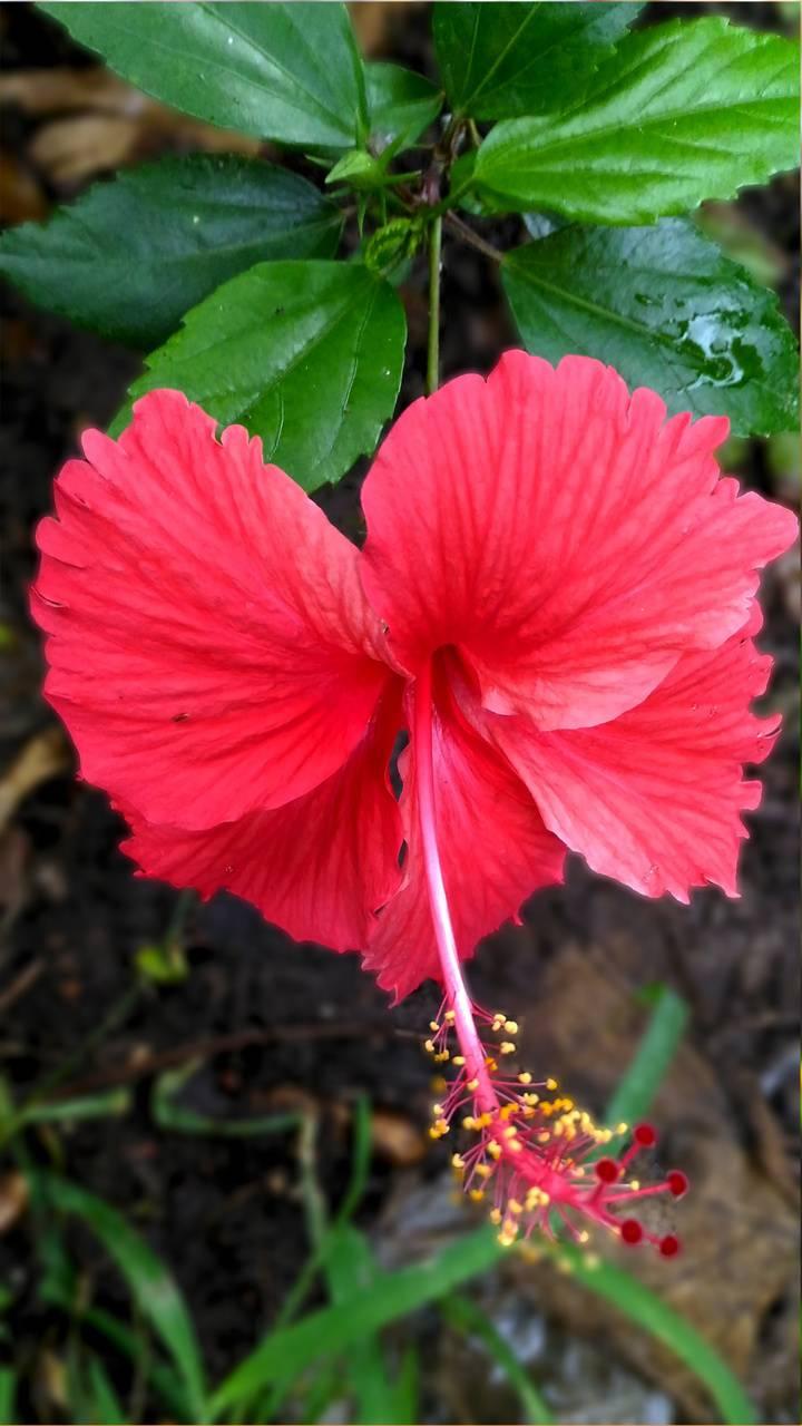 Joba Flower