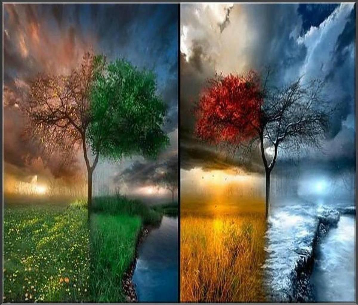 4 Seasons Wall Hd