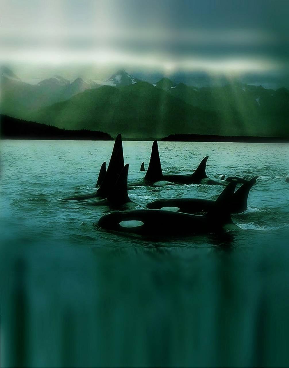 Emerald Orcas