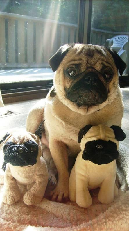 Pug Hug