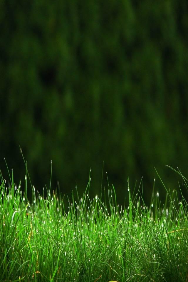 Green Grass Hd