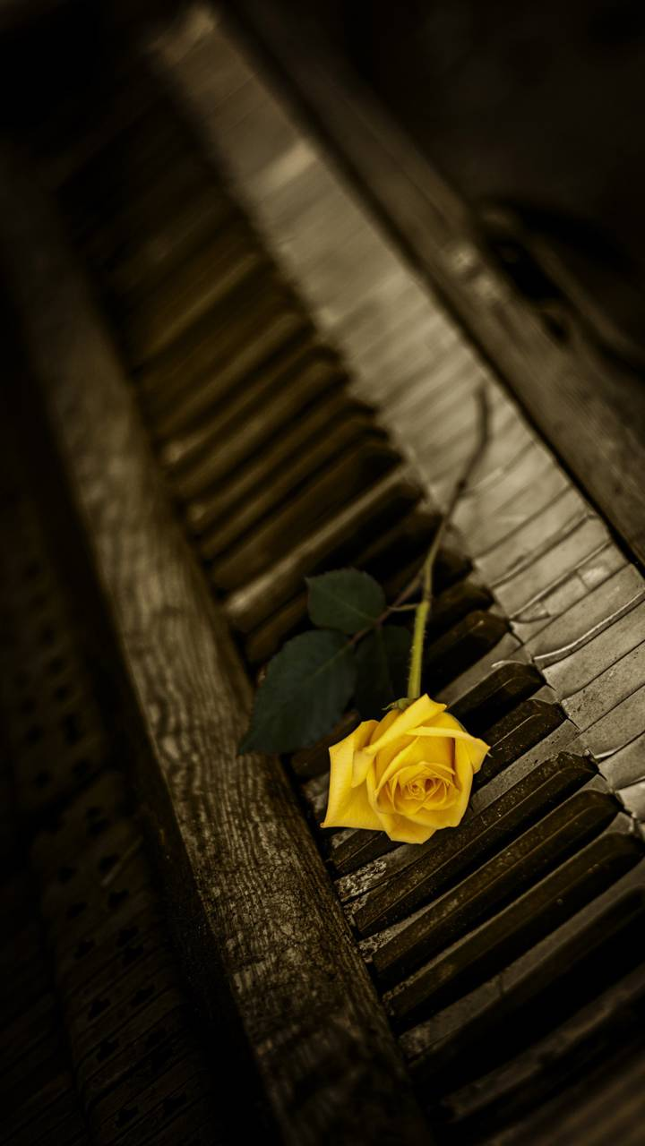 Rose And Piano Wallpaper By Georgekev