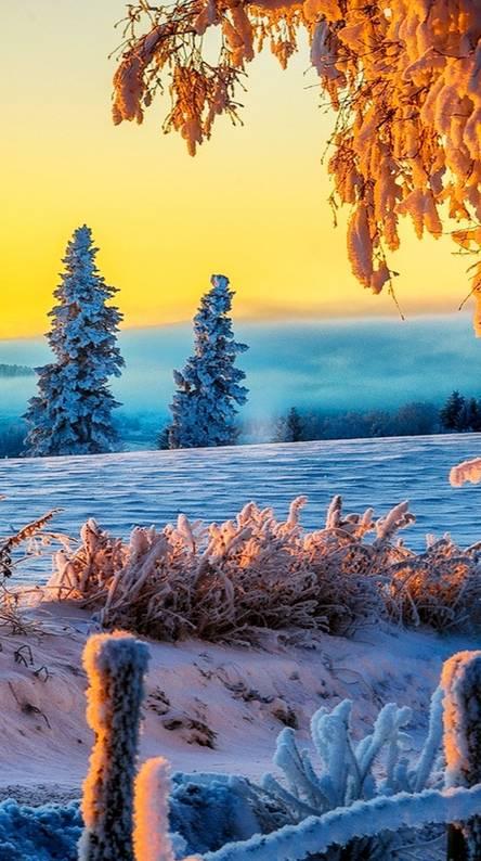 Winter HD