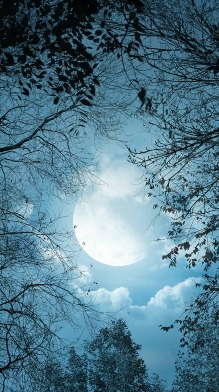 Luna En Winter
