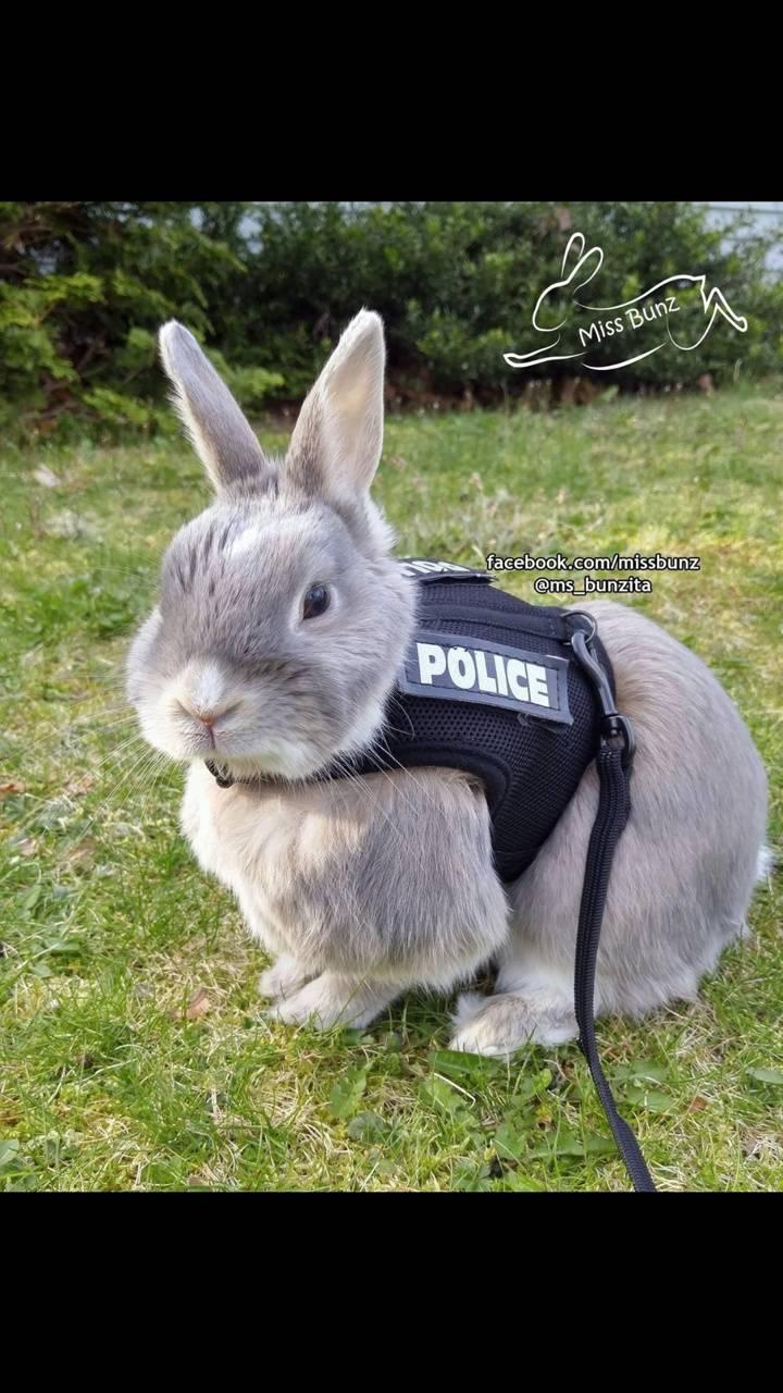 bunny cop