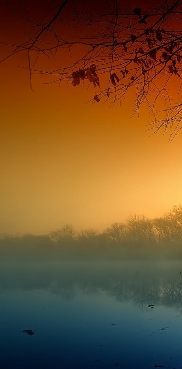 trees haze