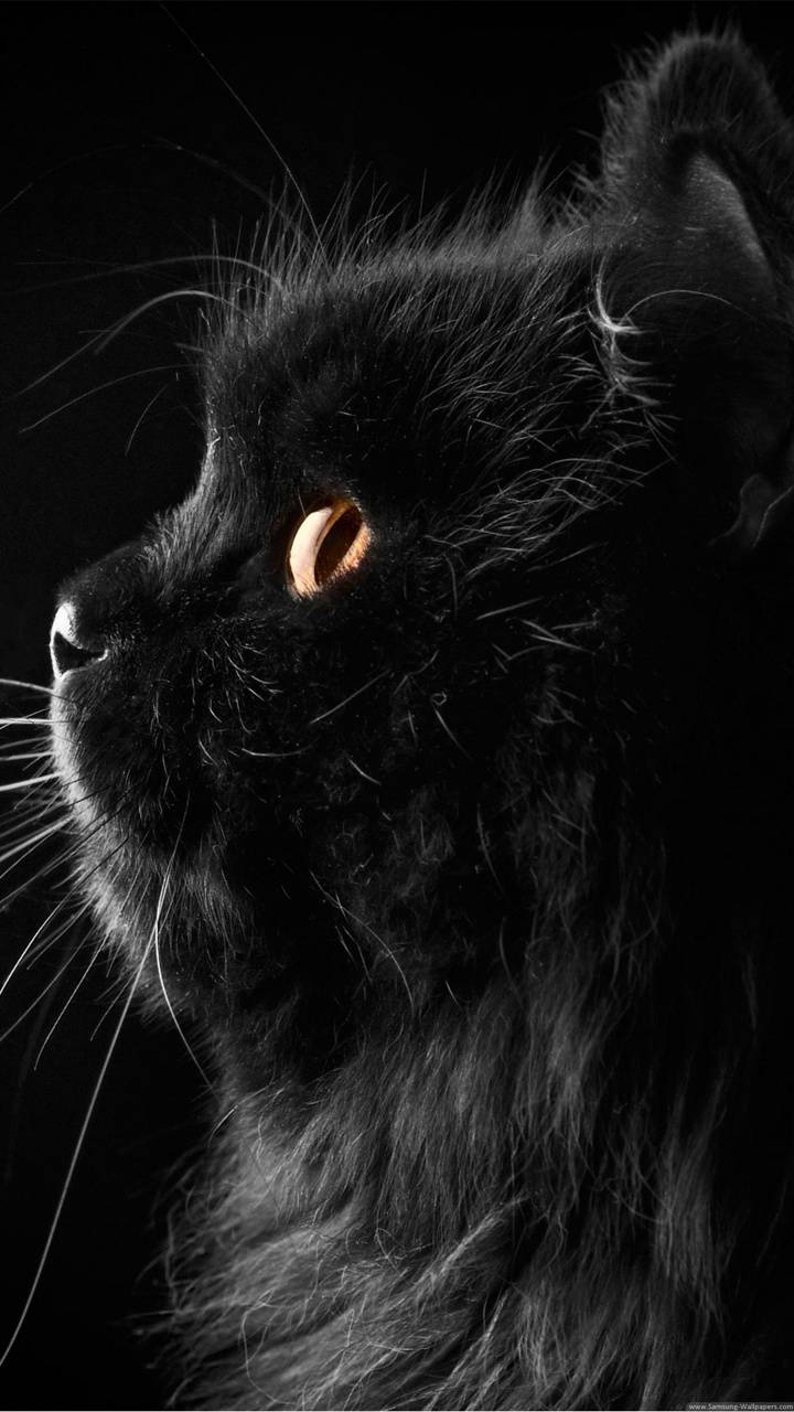 HD Cute black Cat wallpaper by LStheBunny - c0 - Free on ...