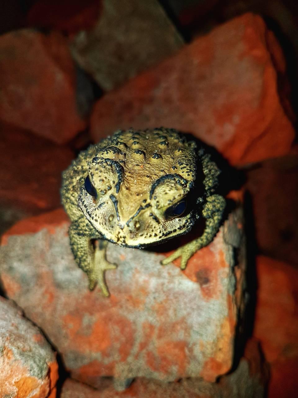 Frog in shoot mode