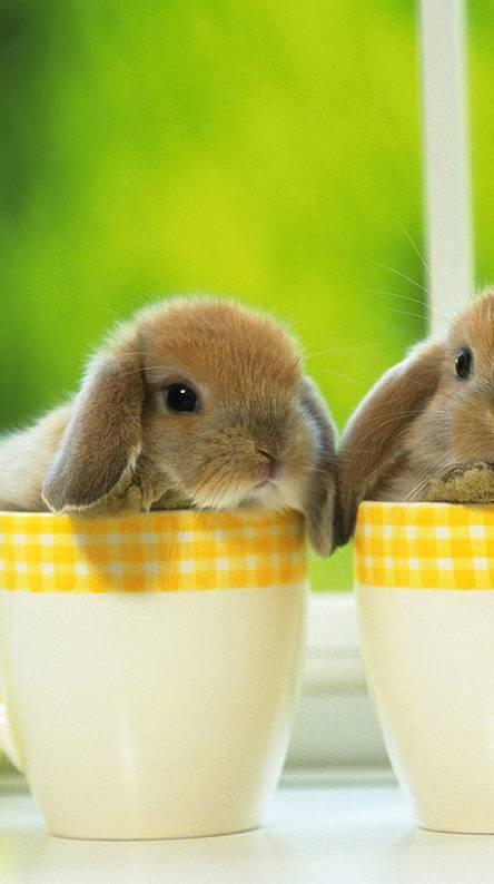 Bunnies Hd