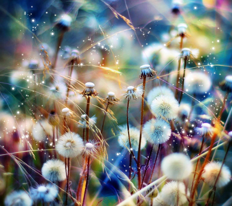Wishing Fields Wallpaper by SlLVER - 88