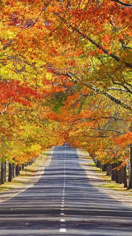 Memorial Avenue