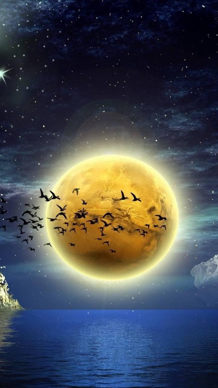 moon birds sea