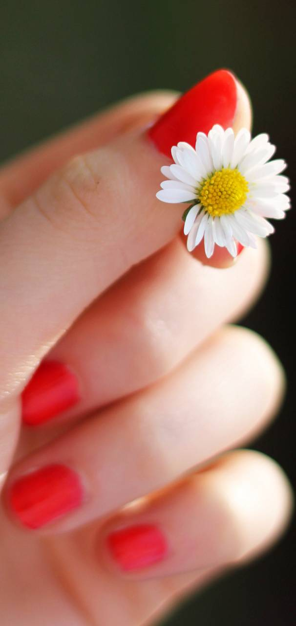 Flower and hand