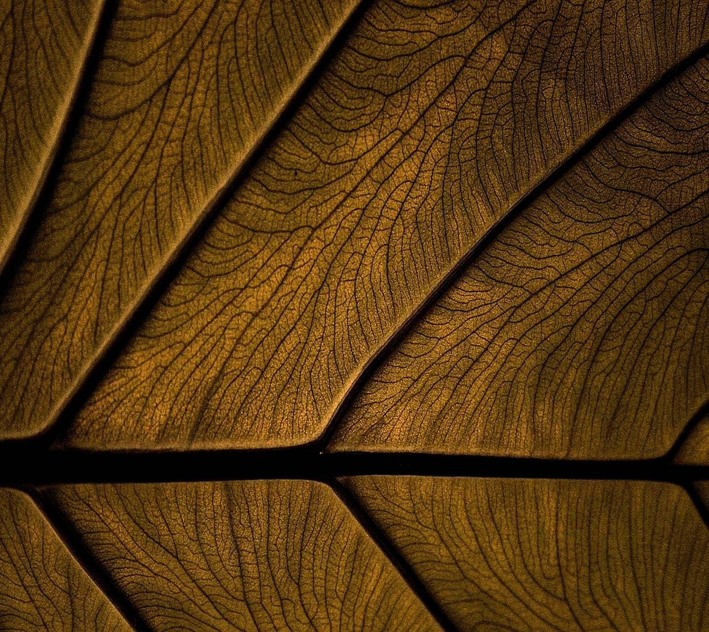 Brown wallpaper