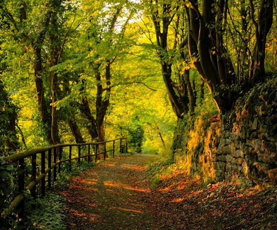 Awesome Forest