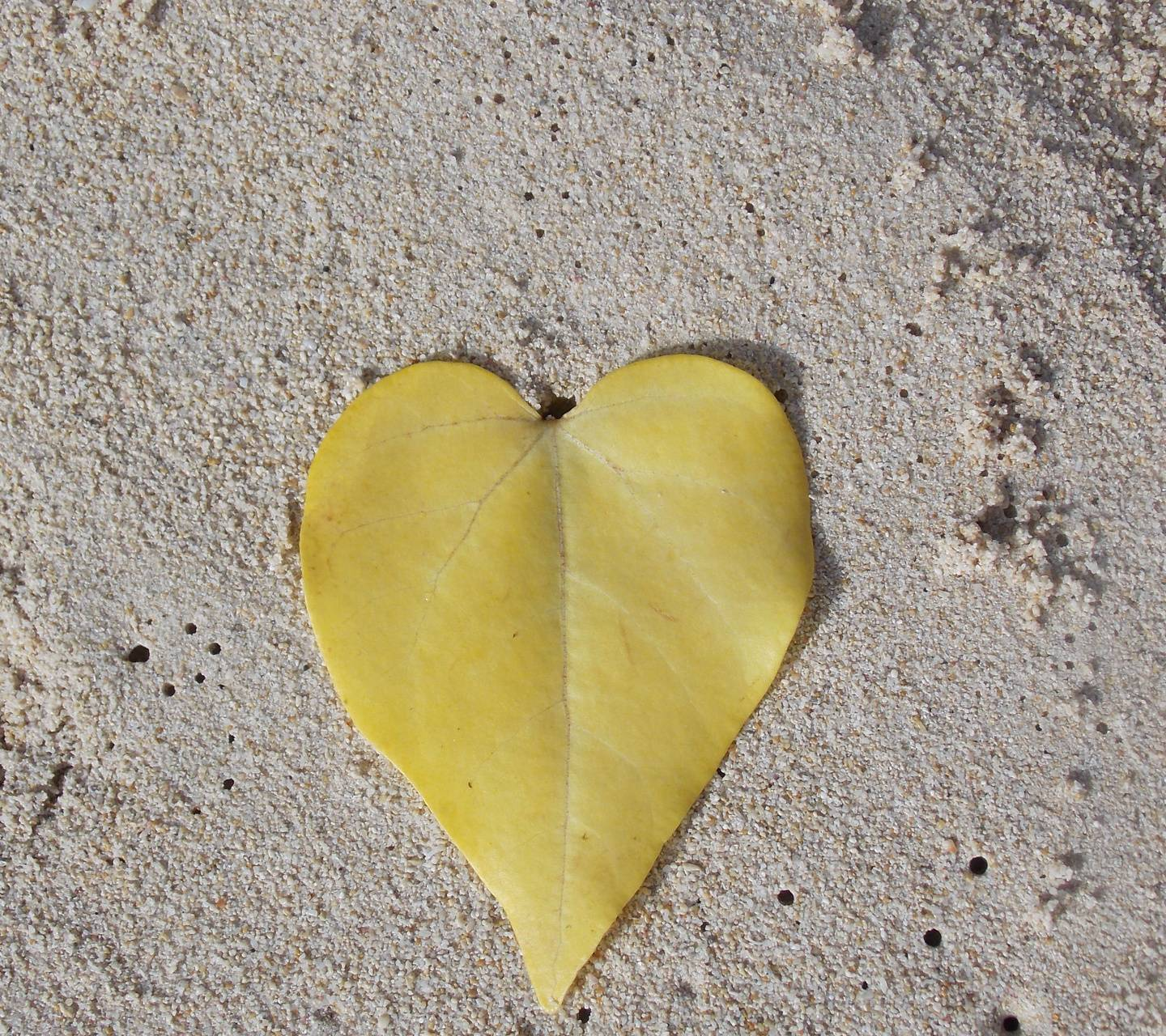 Leaf Shape of heart