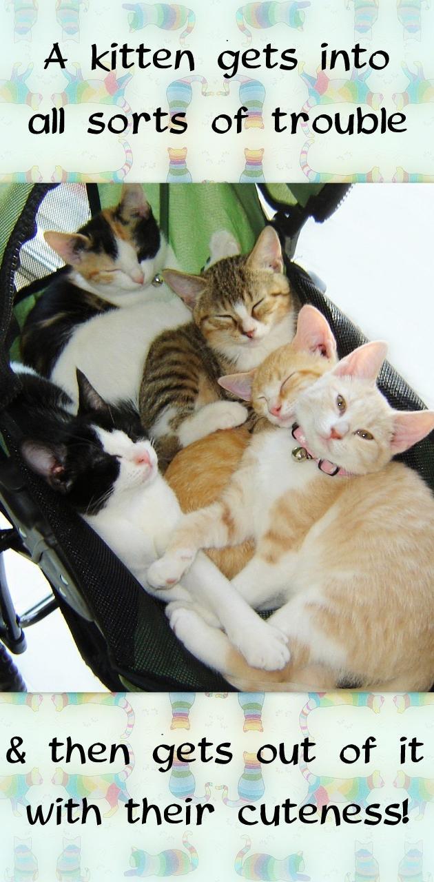 Kitten Cute Trouble