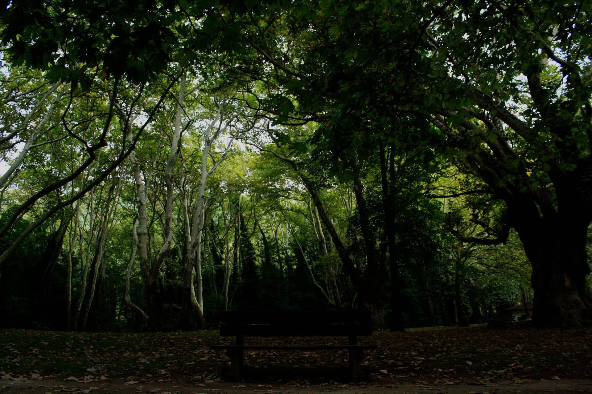 Bench tree