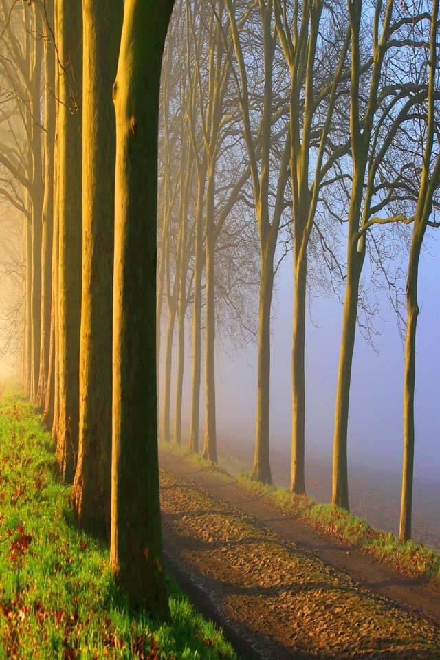 Foggy Road Sunrise
