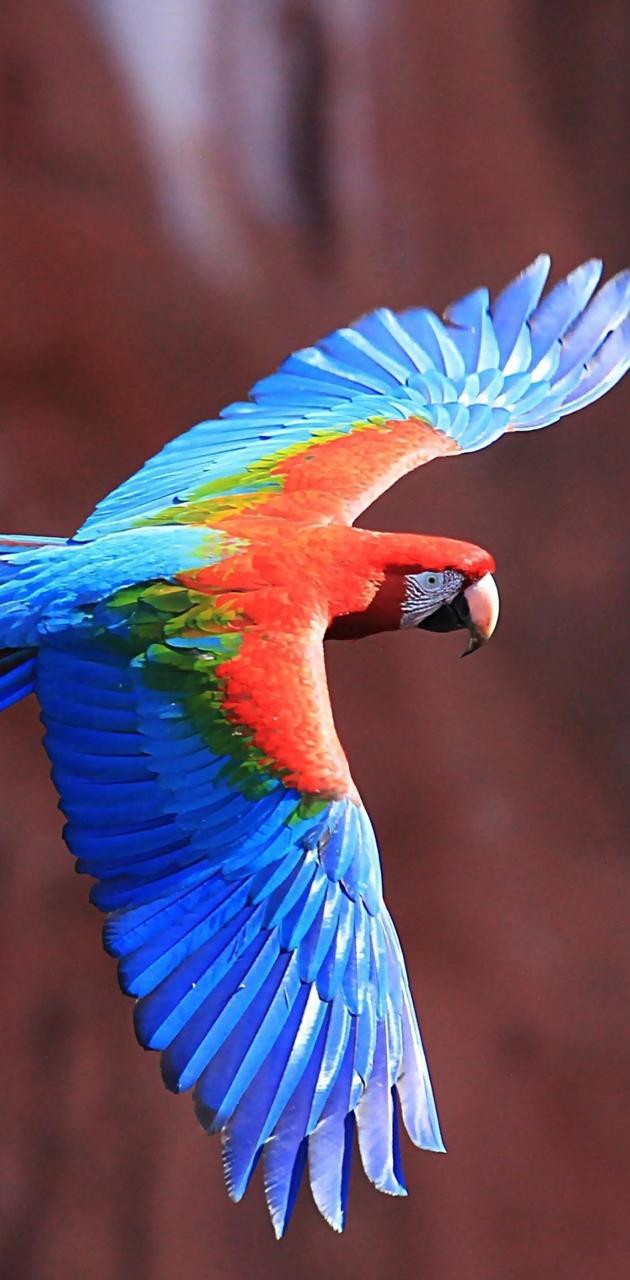 Colors Of Parrot