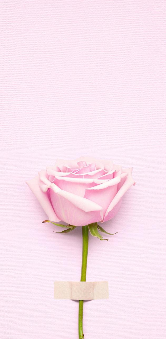 PinklovingRose