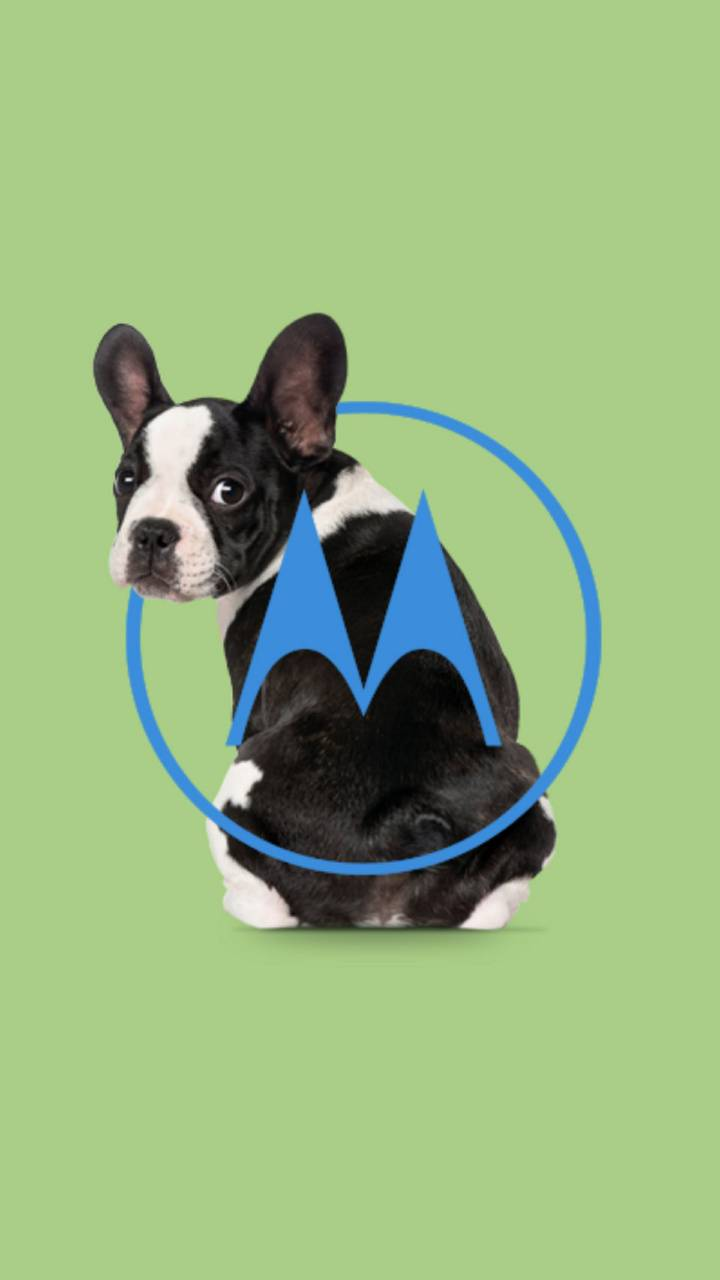 Motorola Green Dog