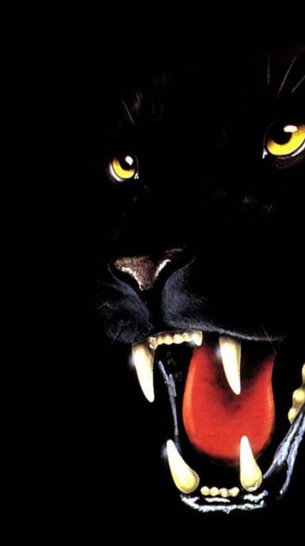 Black Animal Wallpapers Free By Zedge