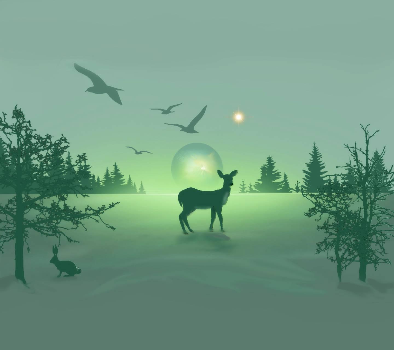 The Roe deer 4