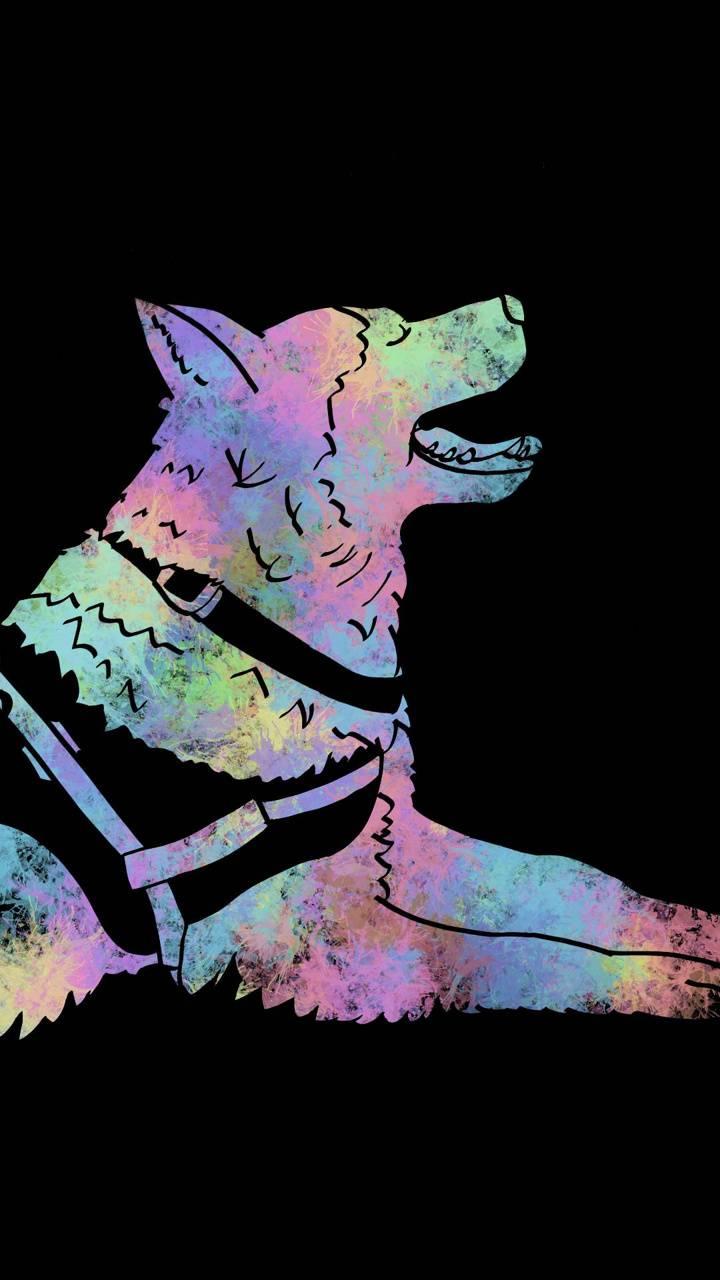 Colorfull husky