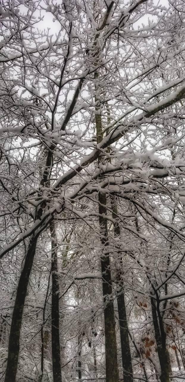 Winter in Atlanta