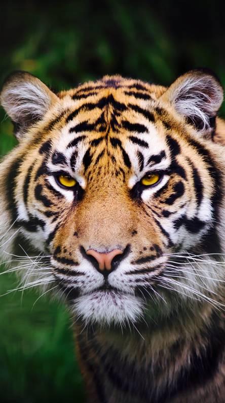 eye of the tiger song ringtone