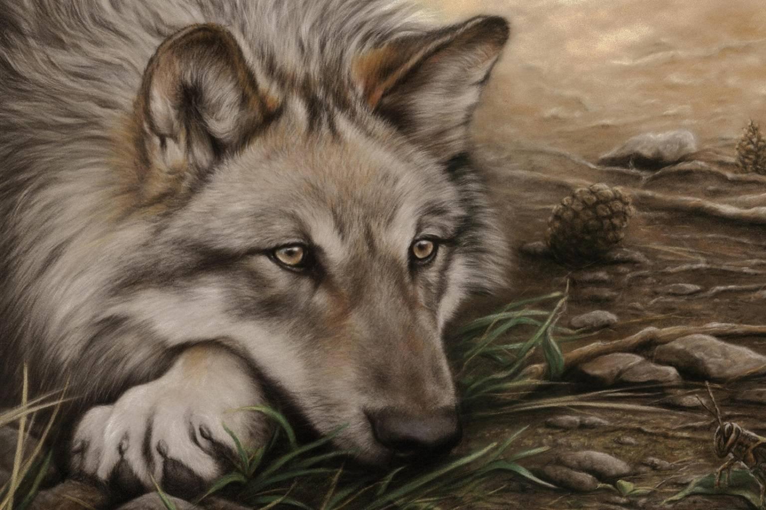 Waiting Wolf