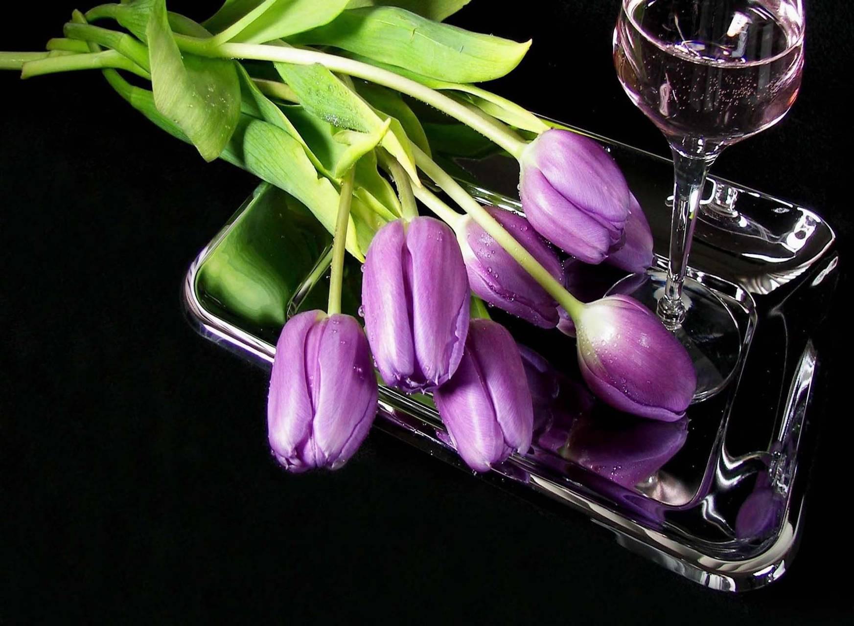 Tulips purple