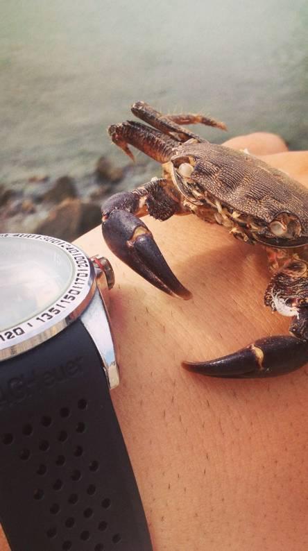 crab atack