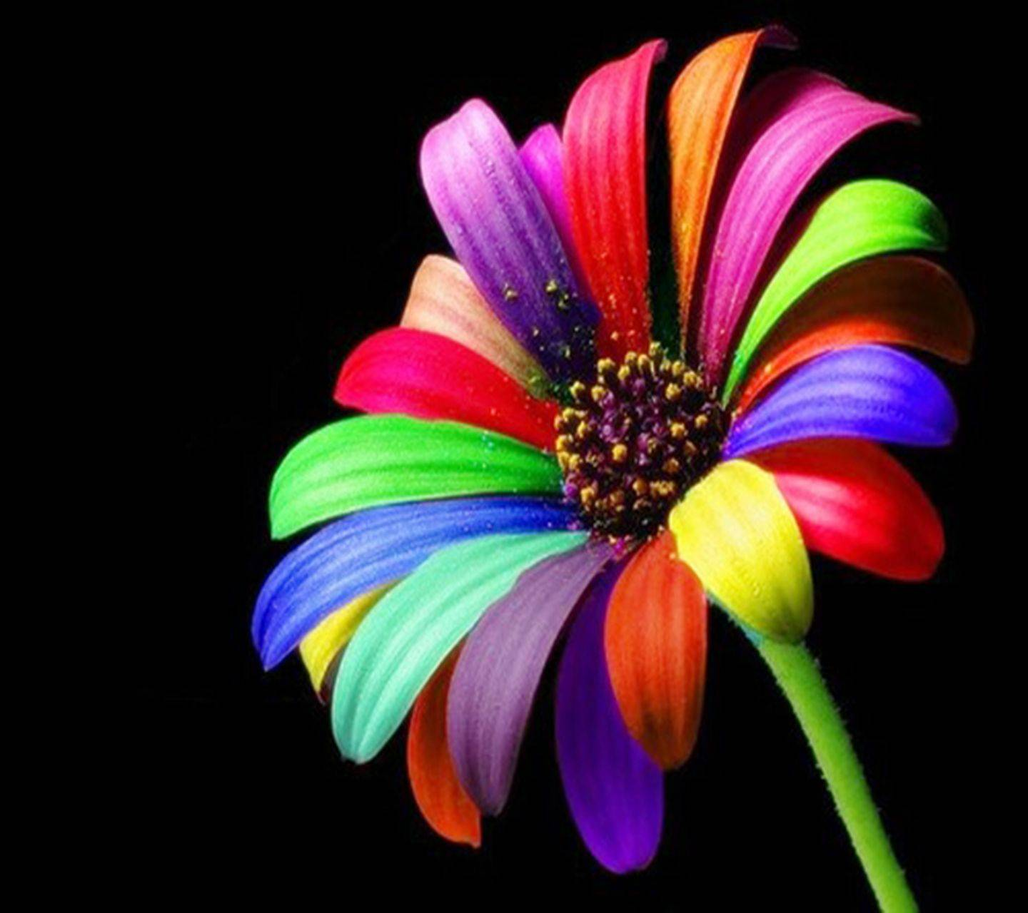 Colourful Flower Hd