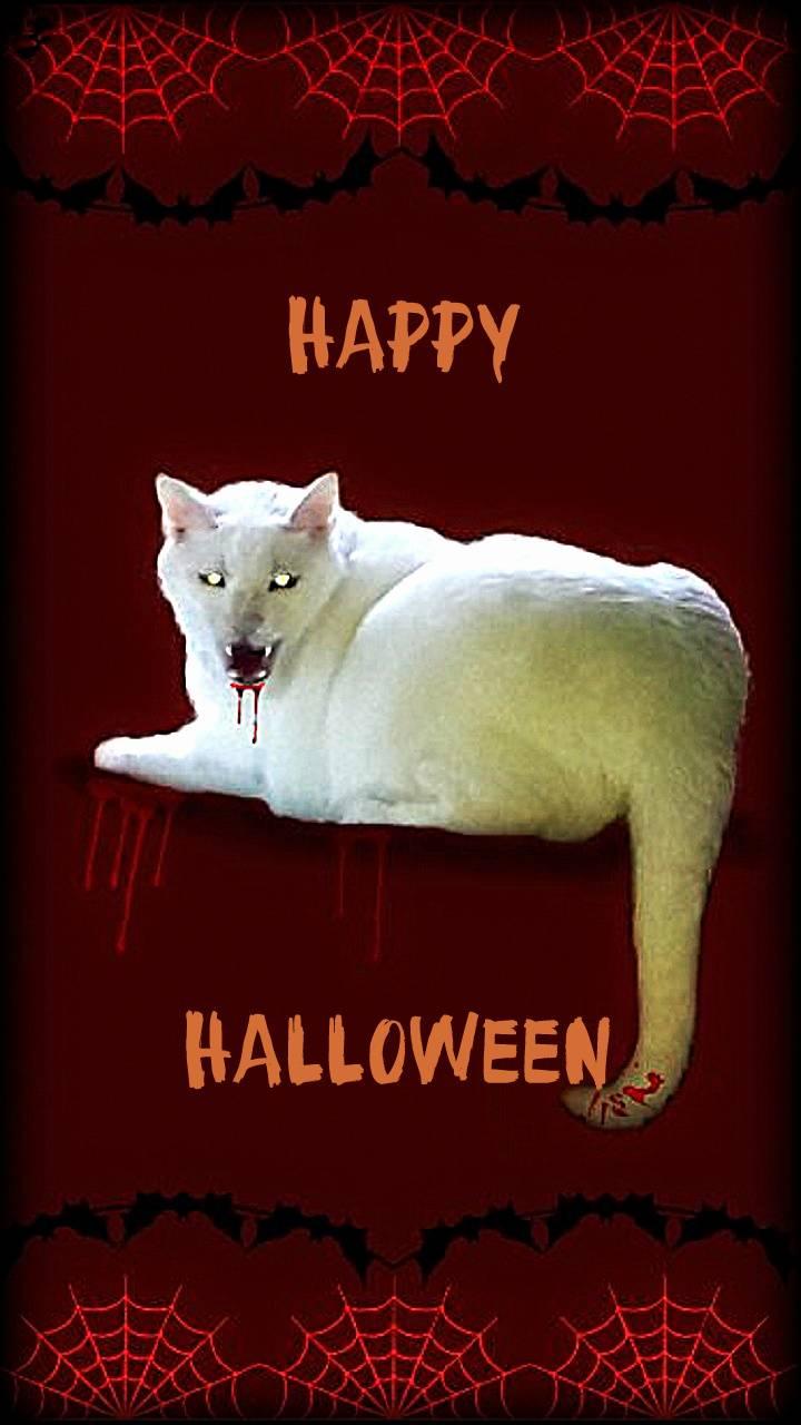 Halloween Evil Cat