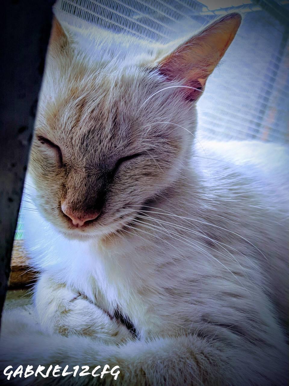 My Kitty Marie