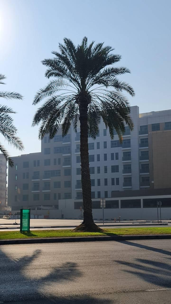 Dubai Tree