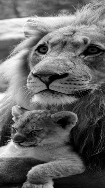 Awesome Lions
