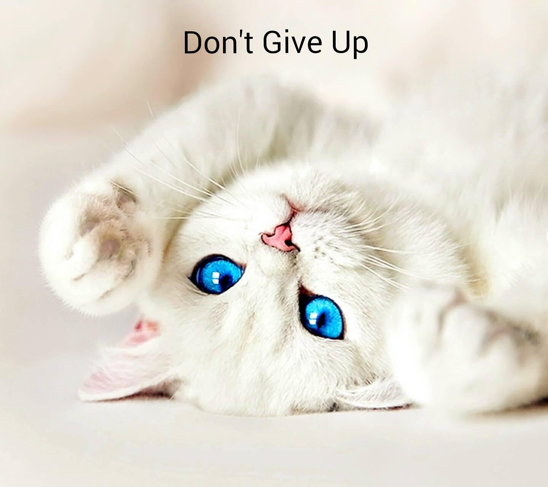 Hope Kitty