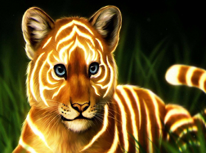 small tiger--------