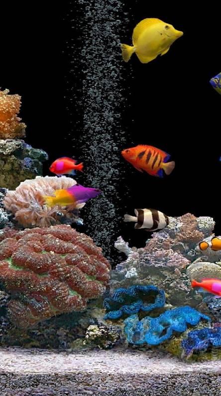 Tropical Fish Aquarium Wallpapers