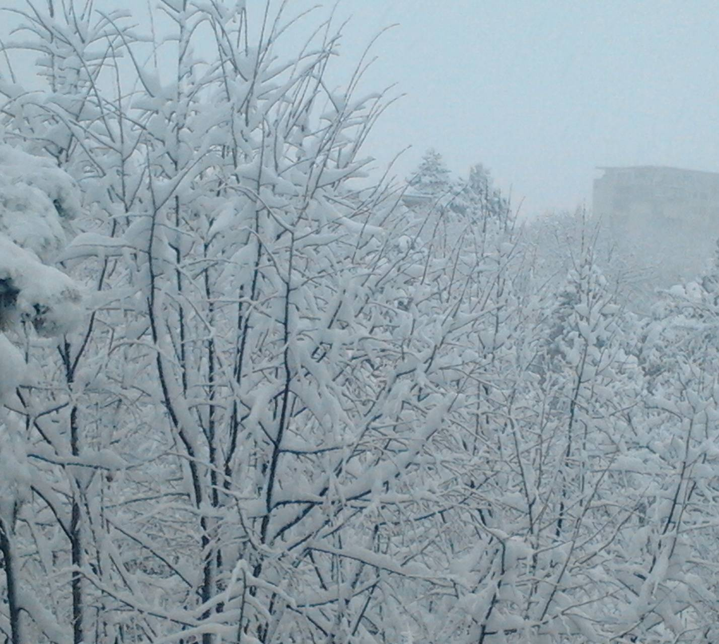Window Winter View