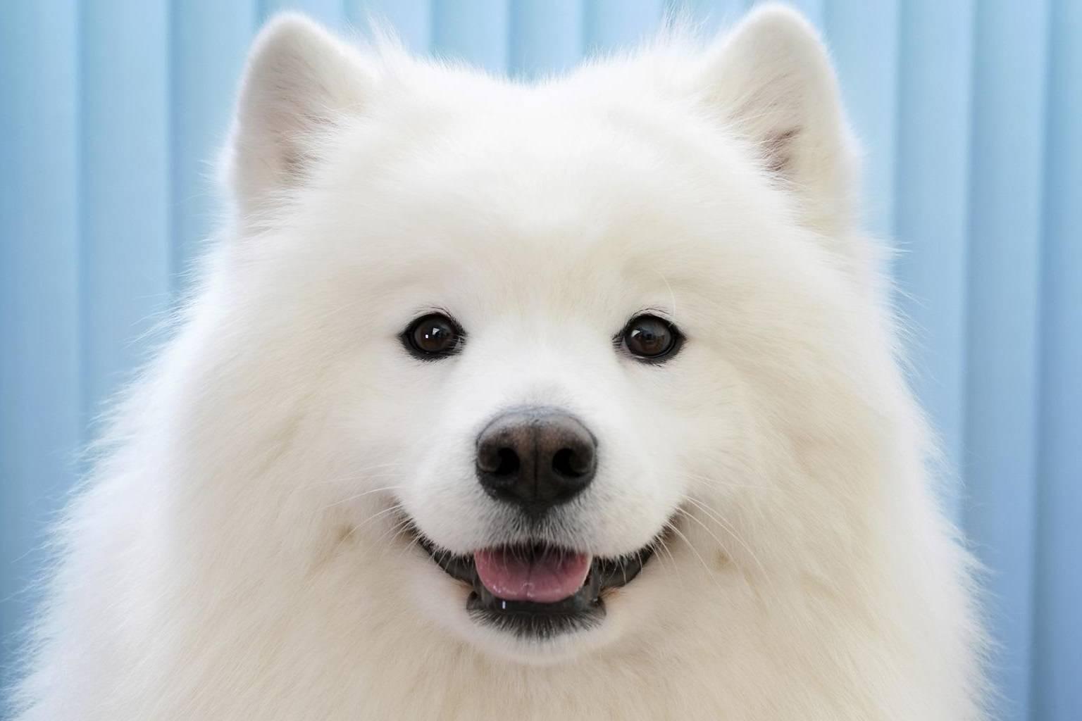 Puppy Smiley Face