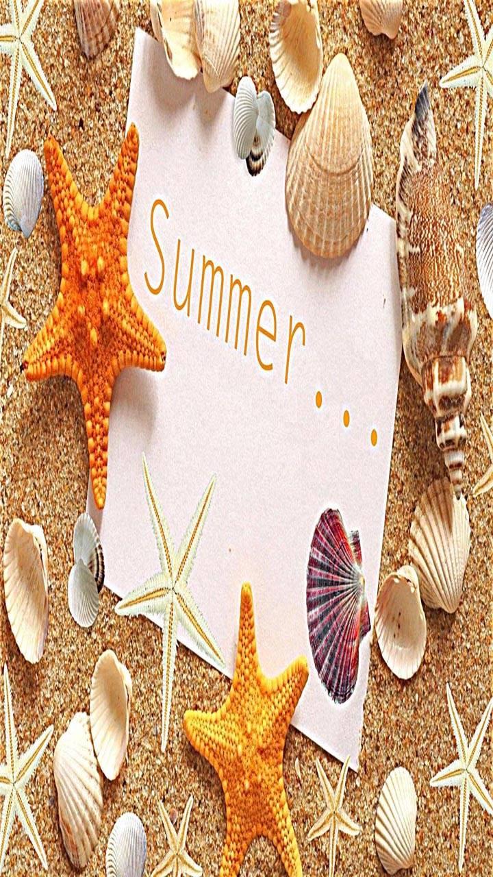 Summer sand Shells