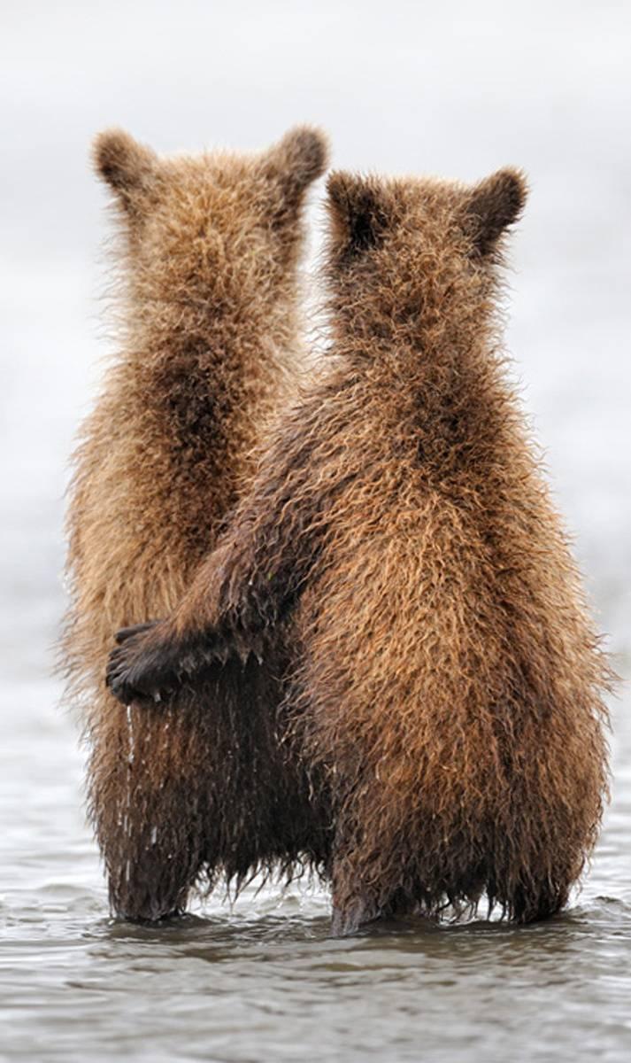 Bears Love Togheter