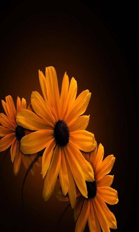 Hd Three Flowers