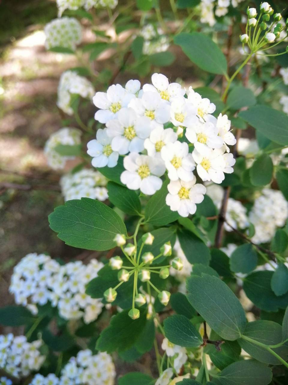 Lot of Flower