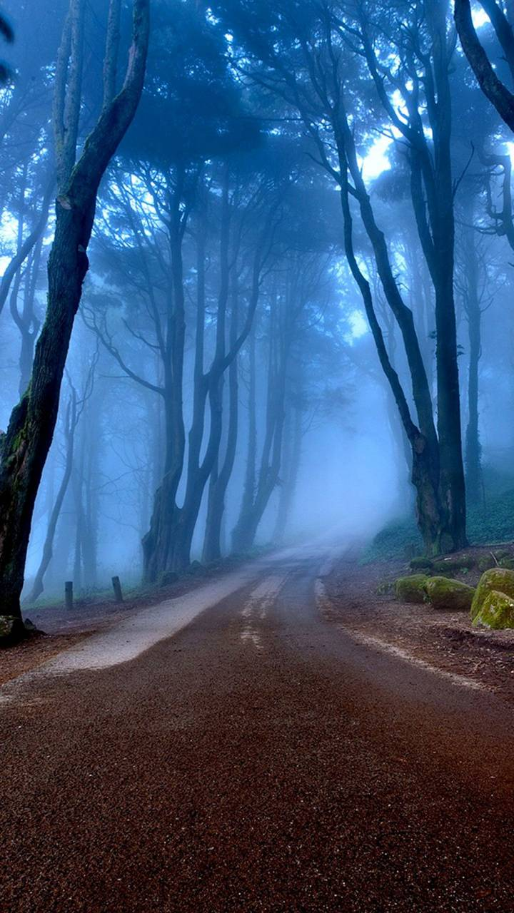 Autumn Road - Forest